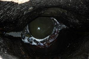 lib.pothole-04